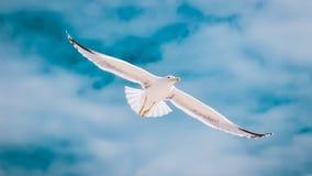 Sky, Bird, Gull, Seabird royalty free stock images