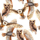 Sky bird owl pattern in a wildlife by watercolor style. Sky bird owl pattern  in a wildlife by watercolor style. Wild freedom, bird with a flying wings Stock Image