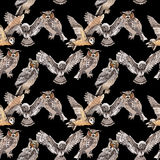Sky bird owl pattern in a wildlife by watercolor style. Wild freedom, bird with a flying wings. Aquarelle bird for background, texture, pattern, frame, border Stock Photo
