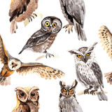 Sky bird owl pattern in a wildlife by watercolor style. Sky bird owl pattern  in a wildlife by watercolor style. Wild freedom, bird with a flying wings Royalty Free Stock Images