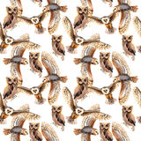 Sky bird owl pattern in a wildlife by watercolor style. Sky bird owl pattern  in a wildlife by watercolor style. Wild freedom, bird with a flying wings Stock Photography