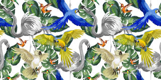 Sky bird parrot pattern in a wildlife by watercolor style. Royalty Free Stock Photo
