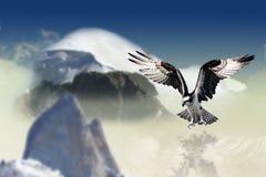 Sky, Bird Of Prey, Eagle, Bird royalty free stock image