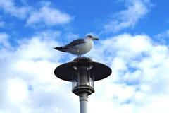 Sky, Bird, Seabird, Beak stock photos