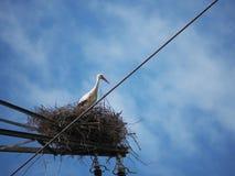 Sky, Bird, Stork, White Stork stock photos