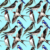 Sky bird Swallows pattern in a wildlife by watercolor style. Royalty Free Stock Photography