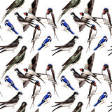 Sky bird Swallows pattern in a wildlife by watercolor style. Royalty Free Stock Image