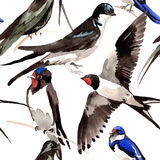 Sky bird Swallows pattern in a wildlife by watercolor style. Stock Photography