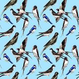 Sky bird Swallows pattern in a wildlife by watercolor style. Stock Images