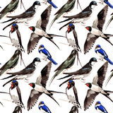 Sky bird Swallows pattern in a wildlife by watercolor style. Royalty Free Stock Photo