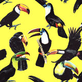 Sky bird toucan pattern in a wildlife by watercolor style. stock illustration