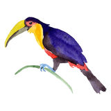 Sky bird toucan in a wildlife by vector style isolated. Wild freedom, bird with a flying wings. Aquarelle bird for background, texture, pattern, frame, border Royalty Free Stock Photography