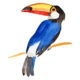 Sky bird toucan in a wildlife by vector style isolated. Wild freedom, bird with a flying wings. Aquarelle bird for background, texture, pattern, frame, border Stock Photo