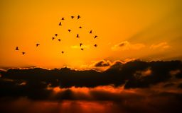 Sky, Birds, Cloud, Orange, Nature Royalty Free Stock Photography
