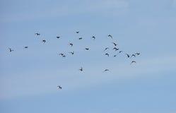 Sky And Birds Stock Photos
