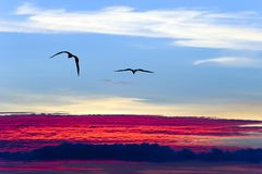 Sky Birds Flying Above the Clouds Royalty Free Stock Photos