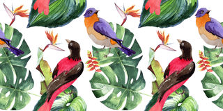 Sky birds of paradise  pattern in a wildlife by watercolor style. Wild freedom, bird with a flying wings. Aquarelle bird for background, texture, pattern Royalty Free Stock Photos