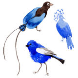 Sky birds of paradise in a wildlife by watercolor style isolated. Royalty Free Stock Images