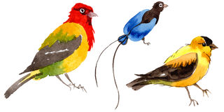 Sky birds of paradise in a wildlife by watercolor style isolated. Stock Photography
