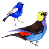 Sky birds of paradise in a wildlife by watercolor style isolated. Stock Photo