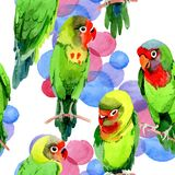 Sky birds small parrots pattern in a wildlife by watercolor style. Wild freedom, bird with a flying wings. Aquarelle bird for background, texture, pattern Royalty Free Stock Photography