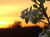 Sky, Blossom, Branch, Leaf stock image