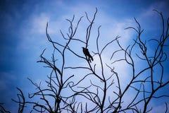 Sky, Blue, Bird, Nature, Wing Stock Photo