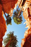 Sky is blue at Bryce NP Stock Photo