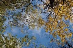 Autumn sky Stock Photos