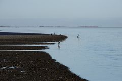 Sky blue fishing herons in The North Sea Royalty Free Stock Images