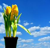 Sky, Blue, Flower, Yellow Stock Photography