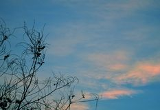 Sky blue. Blue Moon in the evening sky Royalty Free Stock Image