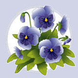 Sky Blue Pansies. Garden fresh sky blue pansies with buds in a pastel blue frame Stock Photography