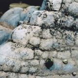 Sky blue rock and limpets Royalty Free Stock Photos