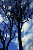 Sky, Blue, Tree, Branch Royalty Free Stock Photo