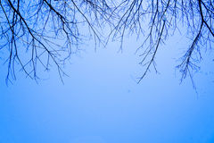 Sky. Blue tree branch background beautiful Stock Photography