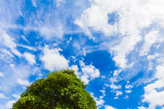 Sky blue and tree with clouds Royalty Free Stock Image