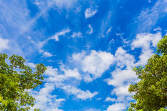 Sky blue and tree with clouds Stock Photos