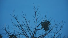 Sky blue. Twigs against the blue sky Stock Image