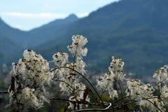 Sky, Branch, Blossom, Flower royalty free stock image