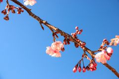 Sky, Branch, Blossom, Spring royalty free stock photo
