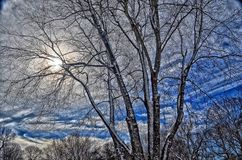 Sky, Branch, Tree, Winter Royalty Free Stock Photos