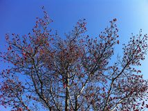 Sky, Branch, Tree, Woody Plant stock images