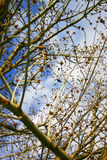 Sky and branches. Full frame of branches and sky Royalty Free Stock Photos
