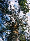Sky through the branches. Cloudy sky through the branches Royalty Free Stock Photo