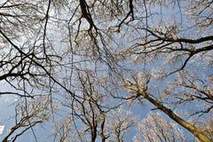 Sky through the branches Stock Photos