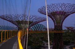 Sky bridge in gardens by the Bay in Singapore. Supertrees and the bridge between them in the night Royalty Free Stock Images