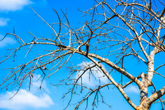 The sky is bright with dead trees. Royalty Free Stock Photos