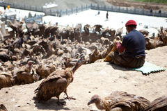 Sky burial. Is to put the dead body to feed the eagle. The eagle fly in the sky after eating, the Tibetans believe that the deceased enter heaven. After death Royalty Free Stock Images