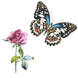 Sky butterfly in a wildlife and wildflower flower rose by watercolor style isolated. Sky butterfly in a wildlife  and wildflower flower rose by watercolor style Stock Photos